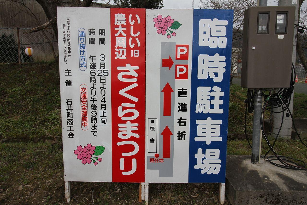 石井町の桜まつり!